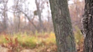 Shooting mark video stock footage