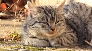 Sleepy kitten video stock footage