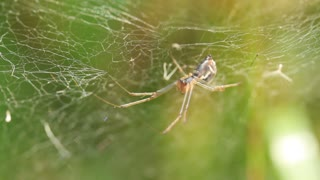 Spider on a web video stock footage