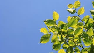 Summer foliage video stock footage