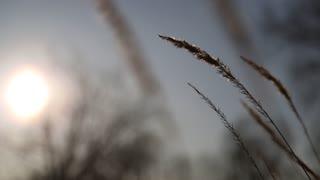 Sun, sky and wind shakes plants
