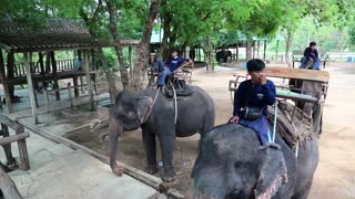 THAILAND, KANCHANABURI PROVINCE, APRIL 5, 2014: Mahouts - people who works with, rides, and tends an elephants. People on elephants