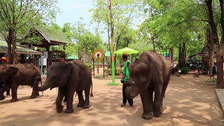 THAILAND, KANCHANABURI PROVINCE, APRIL 5, 2014: People at the show of elephants in Thailand