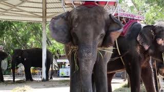 THAILAND, PATTAYA, APRIL 1, 2014: Elephants in zoological garden in Pattaya, Thailand