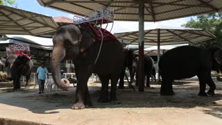 THAILAND, PATTAYA, APRIL 1, 2014: People and elephants in zoological garden in Pattaya, Thailand