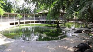 THAILAND, PATTAYA, MARCH 31, 2014: Crocodiles at crocodile farm in Pattaya, Thailand
