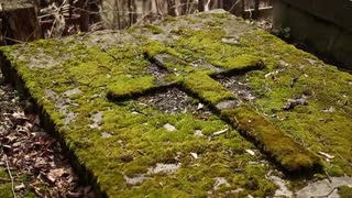 The old tomb with cross covered green moss