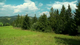 Time lapse of clouds and beautiful green coniferous trees. Video without birds and defects