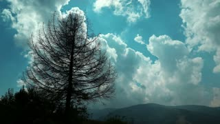 Time lapse of clouds and dead tree in mountains. Video without birds and defects