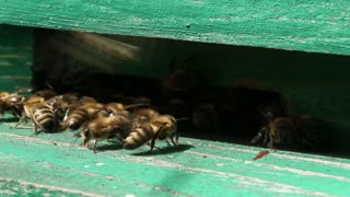 Unrestful bees in green beehive