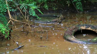 Abuse of environment. Old tyres and other garbage lies on the waterlogged river bank, environmental pollution