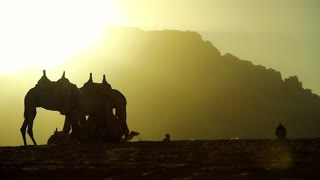 Camels in Wadi Rum desert at sunset. Wadi Rum, also known as Valley of the Moon, is the largest wadi in Jordan. Wadi is a term traditionally referring to a valley