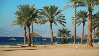 Palms on the beautiful beach. Tropical resort in Tala Bay, Hashemite Kingdom of Jordan. Red sea, gulf of Aqaba. View on Israel and Egypt in the distance