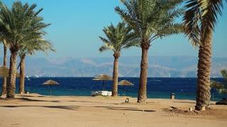 Palms on the beautiful beach. Tropical resort in Tala Bay, Hashemite Kingdom of Jordan. Red sea, gulf of Aqaba. View on Israel and Egypt