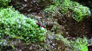 Water from beautiful small brook in forest