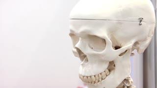 White medical skull