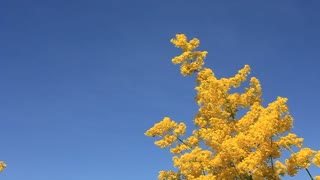 Wild yellow flowers on sky background