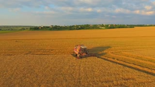 AERIAL VIEW. Agriculture. Combine removes a rich harvest of grain. The camera moves above to the height of the combine harvester in the foreground ears of wheat. Summer sunny, blue sky with clouds