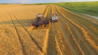 AERIAL VIEW. Combine unloads sloping wheat truck. The camera flies over them gradually moving away from agricultural machinery. Golden field sunny day in the countryside