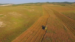 AERIAL VIEW. Harvesting of the summer sunny day. Combine moves on the field, cutting off the ears of wheat. Camera flies above the ground showing the strip of hay that create interesting patterns