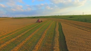 AERIAL VIEW. The camera flies over the harvester catching it. Harvesting machine mowing wheat in the field of green furrows. Above we see the earth in green and yellow stripes