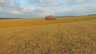 Agriculture. Combine removes a rich harvest of grain. The camera moves parallel to the height of the combine harvester in the foreground ears of wheat. Summer sunny, blue sky with clouds