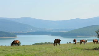 Beautiful mountain landscape with a herd of domestic horses peacefully grazing on green pasture near lake with hilly terrain and misty sky on background