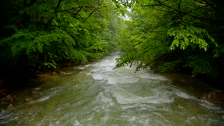 Full frame shot of a picturesque view of a rapid mountain river flowing down off the camera surrounded with green trees in the forest