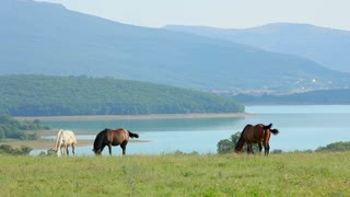 In the frame there is an overall shot of mountains and lake in mist on background and a herd of wild horses peacefully grazing and feeding in a pasturage