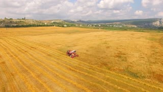 This is an aerial shot of a large yellow field with one harvester combine working at it collecting ripe seeds leaving straw lines and bales with green hills and cloudy sky on background