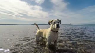 Dog Running and Splashing Playfully in Water
