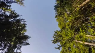 Low angle view of tall trees passing by while driving
