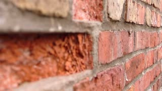 Red brick wall with a broken/missing brick, focus rolls from background to foreground
