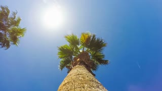 Bright sun moving across a clear blue summer sky above tall palm trees blowing in a breeze, time lapse footage