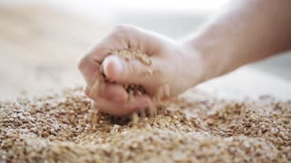 agriculture, farming, prosperity, harvest and people concept - male farmers hand grabbing and pouring malt or cereal grains