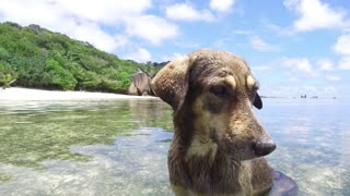 animal and nature concept - dog in sea or indian ocean water