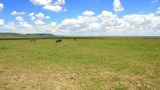 animal, nature, safari and wildlife concept - group of different herbivore animals in maasai mara national reserve savanna at africa