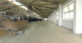 Cows in the barn on a farm