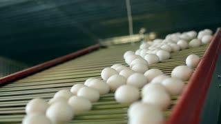 Eggs on the conveyor