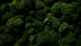 In the dark moss is growing on the rocks. Rich green color. Great background