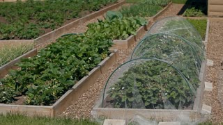 Neat beds in a private garden area with strawberries, cucumbers and other crops. There are paths of gravel between them
