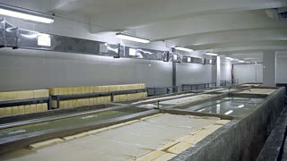 Production of cheese. Cheese is lying in a large pool of salt water and maturing until it is ready