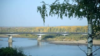 There is a birch in the foreground, a river is behind it. Across the river a bridge is thrown, cars are moving on it