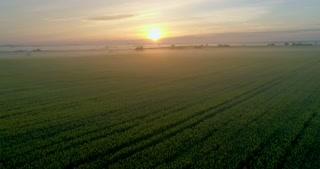 A fabulous field at sunrise