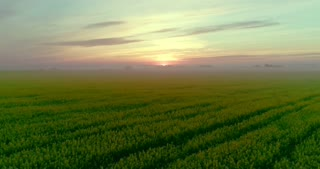 A green field at sunrise