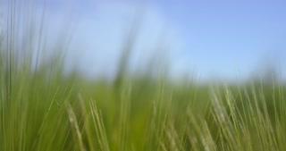 A green field under a blue sky