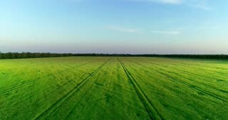 A huge green field with a beam of the sun walking on it