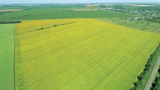 A huge yellow field from a bird's eye view