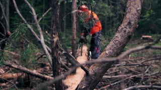 A lumberjack is processing a tree in the forest