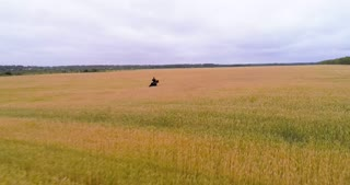 A man is riding a horse between the ears of wheat